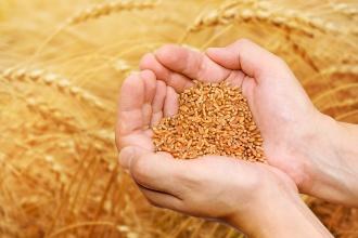 Стократный урожай — это сколько?